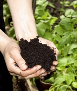 Important Facts About Organic Fertilizer
